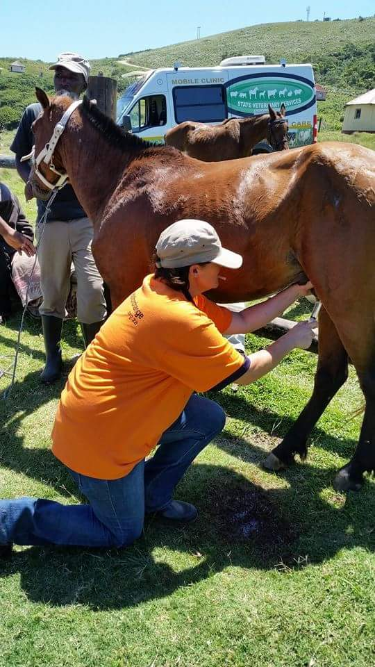 hole-in-the-wall-eastern-cape-equine-castration-project-&amp-rabies-prevention-29-october-&ndash-2-november-2015