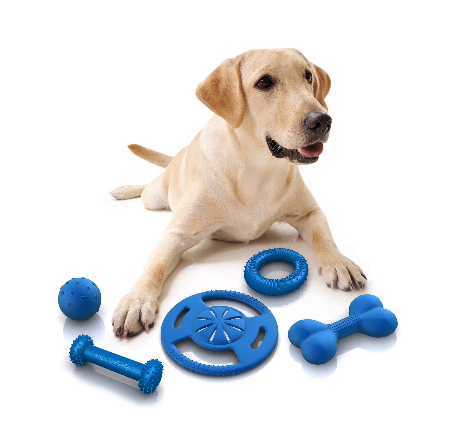 Interactive And Durable Toys Services
